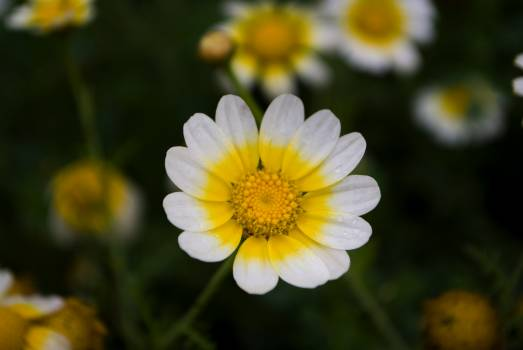 Flowers #45245
