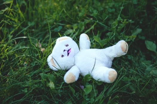 White Bear Plush Toy Free Photo