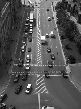 Black and white cars traffic palms Free Photo
