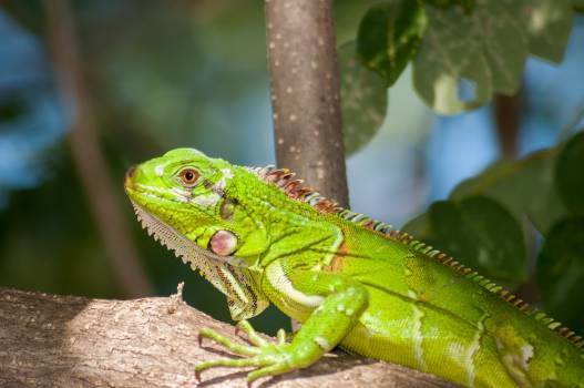 Green Reptile on Brown Tree Free Photo