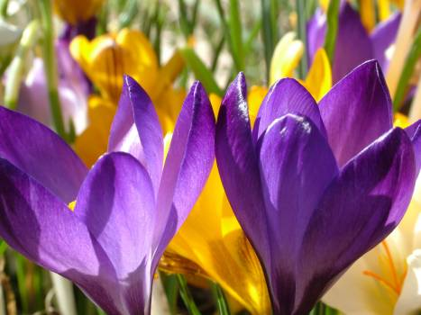 Purple Flower and Yellow Flower during Daytime in Close Photography #45465