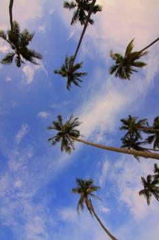 Bottom View of Palm Trees #45591