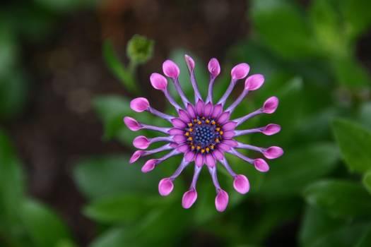 Closeup Photography of Pink Petal Flower #45748