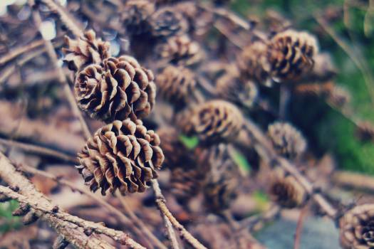 Pine Cones on Close Up Photography #45798