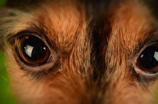 Brown and Black Animal Eyes #45856
