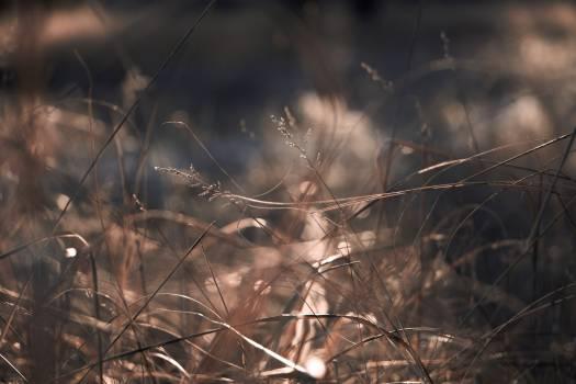 Brown Grass #45896