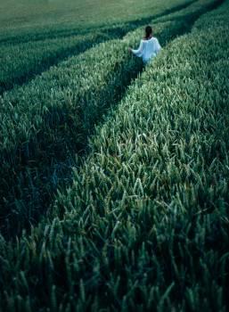 Person In The Field #45912