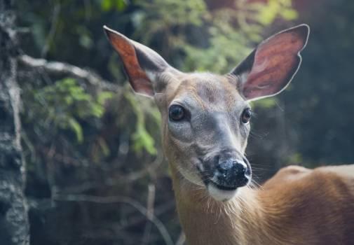 Deer during Daytime #45978