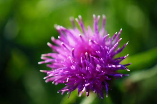 Purple Flower in Macro Lens Photography #46066