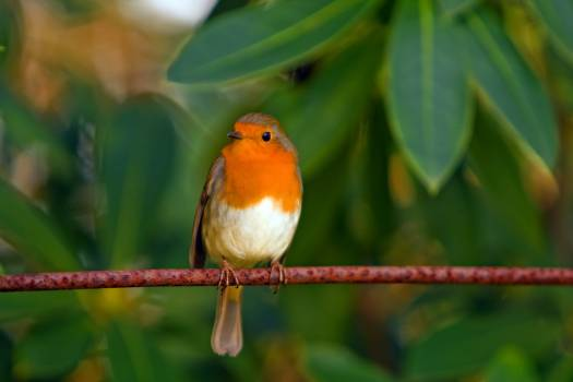Orange White Brown Bird on Top of Red Branch #46077