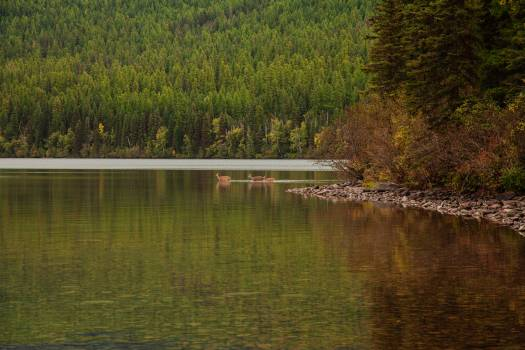 Lake Surrounded With Green Pine Trees at Daytime Free Photo
