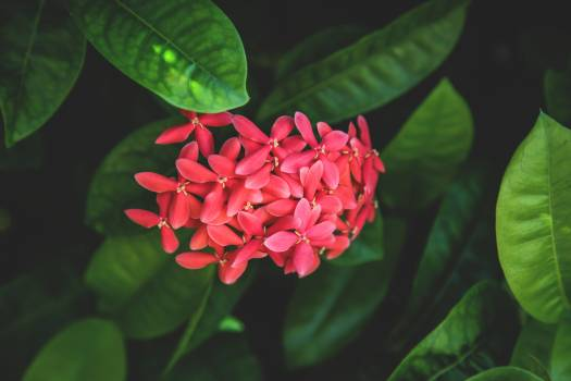Plant leaves nature pink #46167