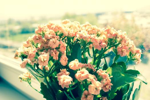 Pink Flowers on Green Plants Phptography Free Photo