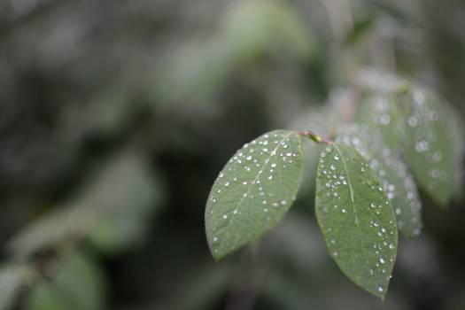 Green Leaves With Waterdrops Free Photo