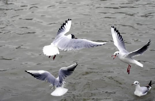 Sea water ocean birds Free Photo