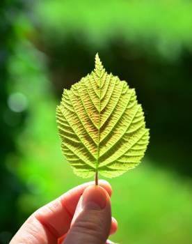 Shallow Focus Photography of Person Holding Green Leaf Free Photo