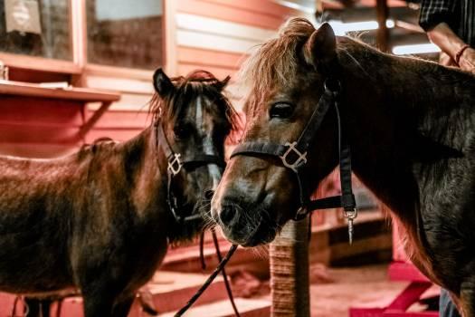 Farm horses animals pets Free Photo