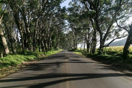 Road trees sunny #46690