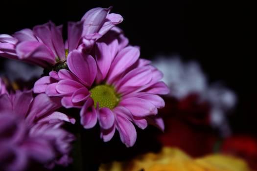 Purple Flowers #46693