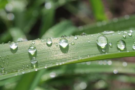 Macro Photography of Dewdrops on Green Plant Free Photo