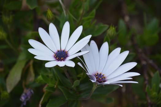White Petal Flower #46816