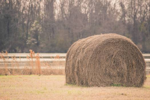 Sepia Tone Photography of Hay on Field #46867