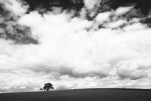 Tree on Field Under Clouds in Grayscale #46931