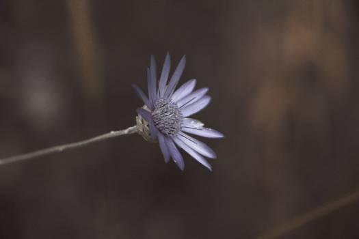 Macro Lens Photo Showing Purple Flower #46963