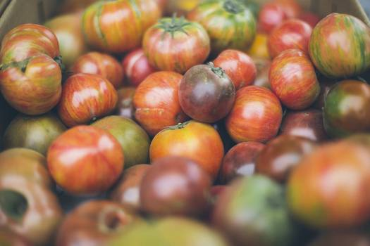 Close Up Photography of Tomatoes #46964