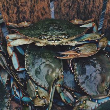 Crabs sea sea food nature #47027