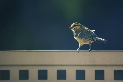 Bird sparrow animal nature #47056
