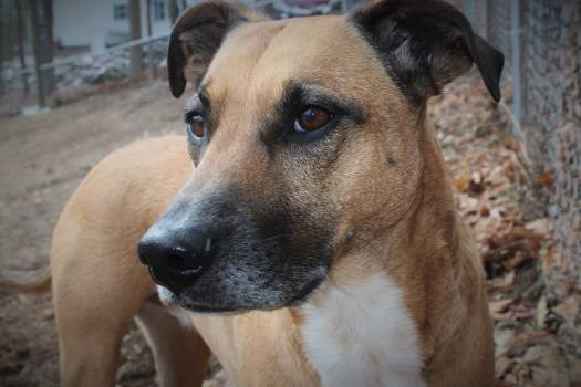 Dog rescue dog browns #47087