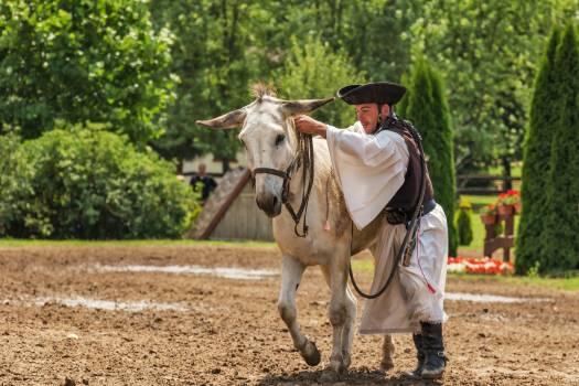 Man animal culture donkey Free Photo