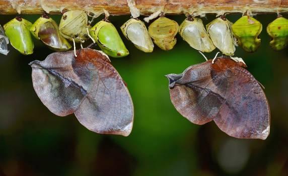 Nature macro butterfly larva #47190