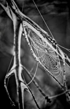 Spider Web Grayscale Photo Free Photo