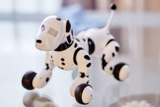 White and Black Dog Robot on Clear Glass Table Free Photo