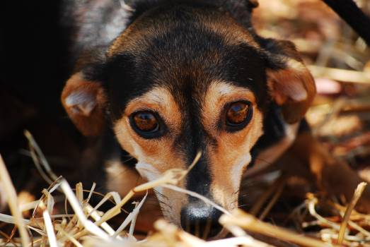 Black Brown Coated Dog on Dried Grass #47367