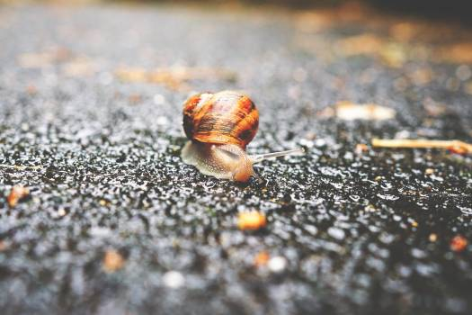 Selective Focus Photography of Snail on Grey Asphalt Road during Daytime Free Photo