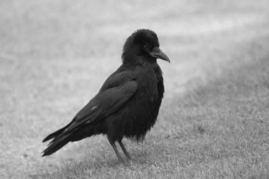 Black and white bird Free Photo