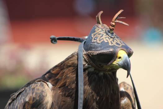 Bird of prey #47471