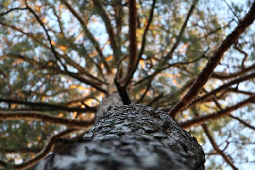 Low Angle Photography of Trees during Daytime #47606