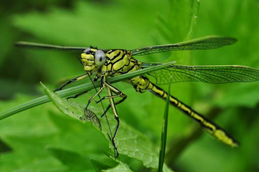 Green and Black Dragonfly on Green Leaf during Daytime #47729
