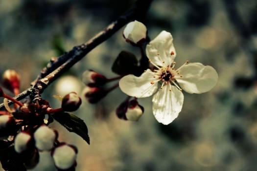 Flower nature bloom flora #47770
