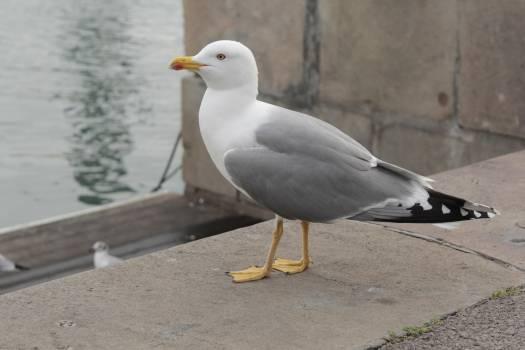 Seagull bird nature animal #47877