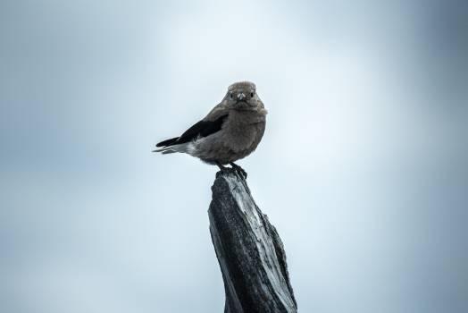 Bird animal cute plumage #47914
