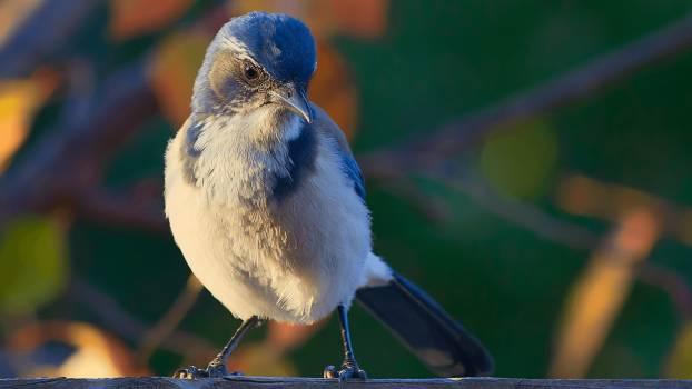 White Black Small Bird During Daytime #47972