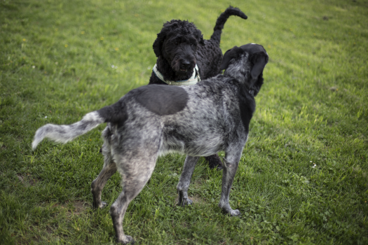 2 Black and Grey Dog on Grass Field during Daytime #47998
