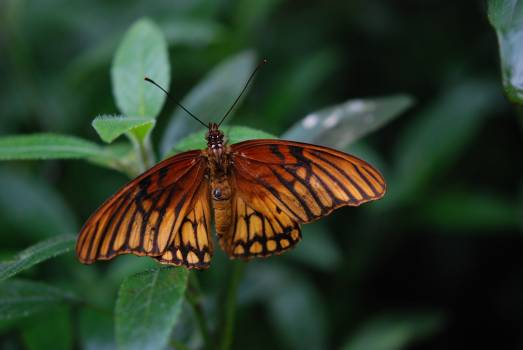 Brown and Black Butterfly on Green Plant during Daytime Free Photo