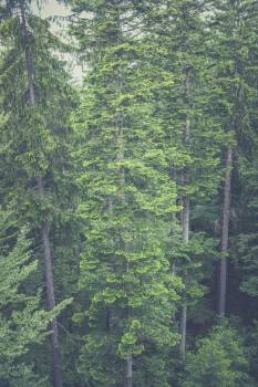 Aerial View of Tall Trees in the Woods Free Photo