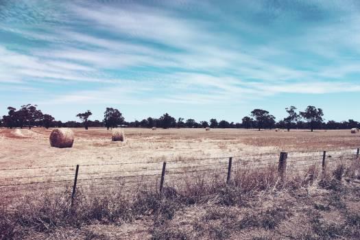 Dry bush farm fence Free Photo